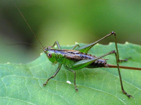 مجموعة ماكرو للحشرات سبحان الله